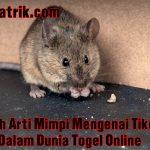 Inilah Arti Mimpi Mengenai Tikus Dalam Dunia Togel Online